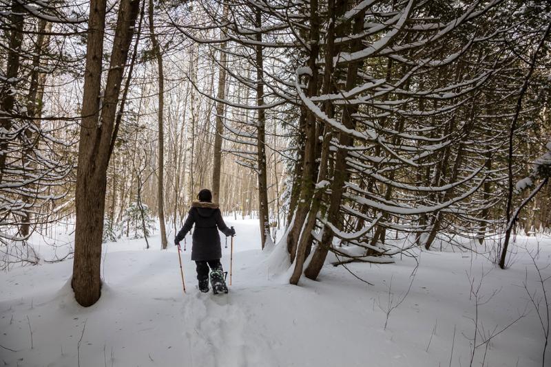 Snowshoeing at Wye Marsh